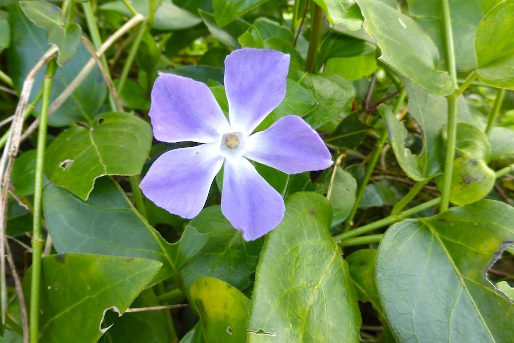 Quelques fleurs de mon jardin sous le soleil!
