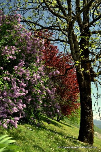 2015.04.24 Lacs de la Thuile et de St-André (Rhône-Alpes, Savoie) 2
