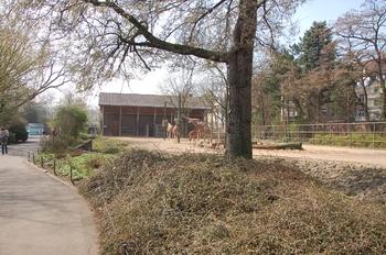 zoo cologne d50 2012 188