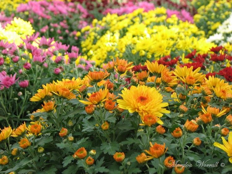 Chez le fleuriste : préparatifs pour la Toussaint