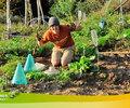 2014 - Jadon (USA-Orégon) désherbe le potager