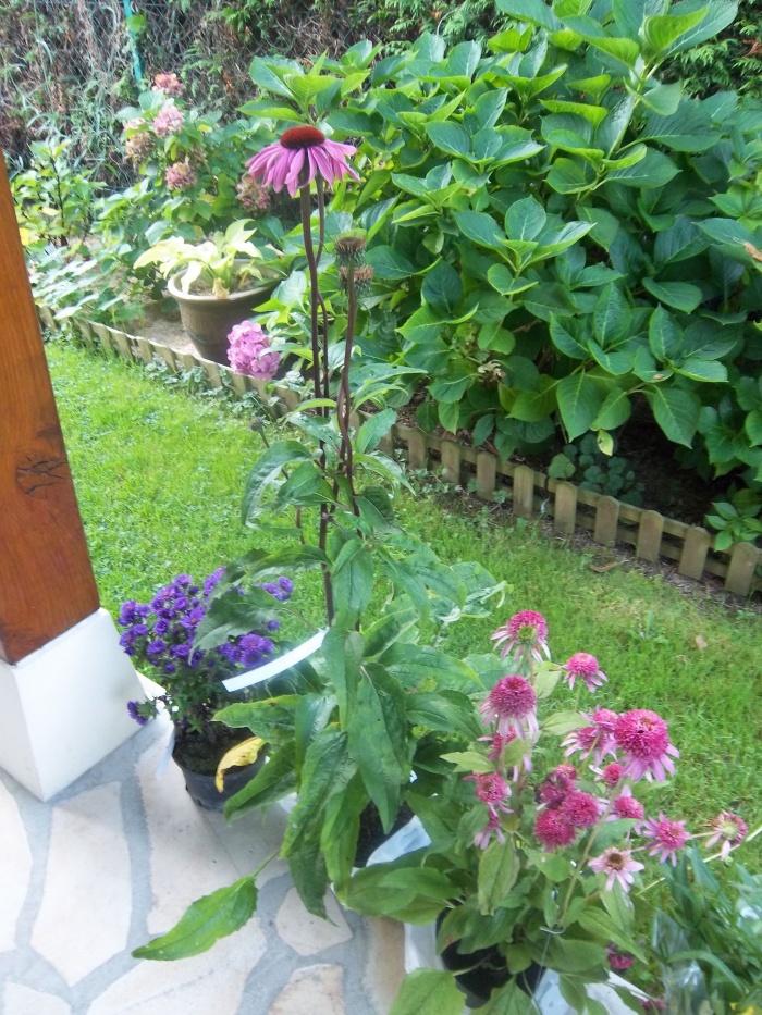 allez des nouveautés pour le jardin!!