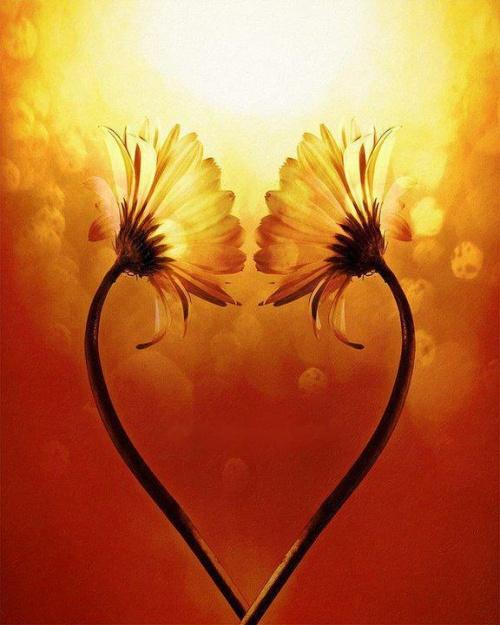 Fleur de poésie, source de vie
