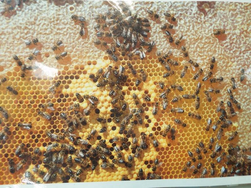 """""""l'abeille et son miel"""" ..."""