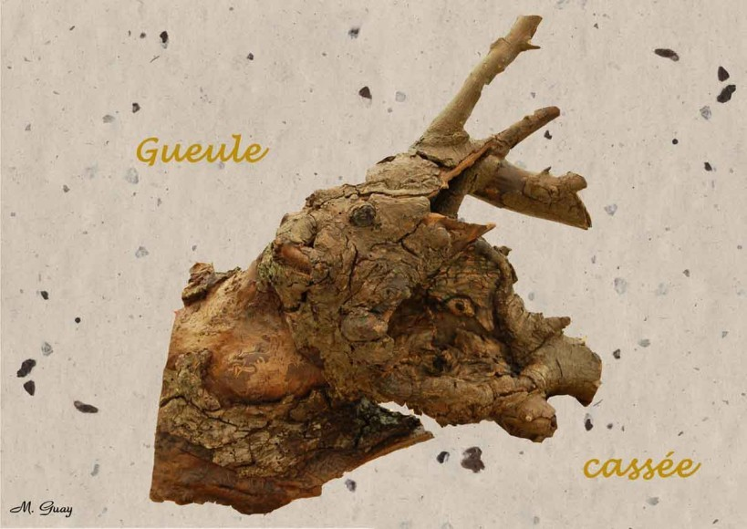 gueule-cassee-3383