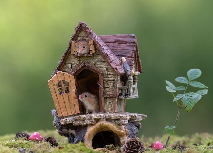 Adorables photos de souris minuscules récoltées jouant joyeusement dans la nature