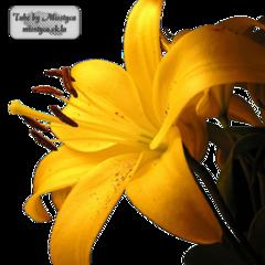 Flower's 1.
