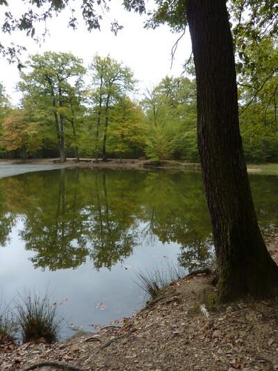 La forêt de Saint-Germain en l'Haye et le Musée Maurice Denis