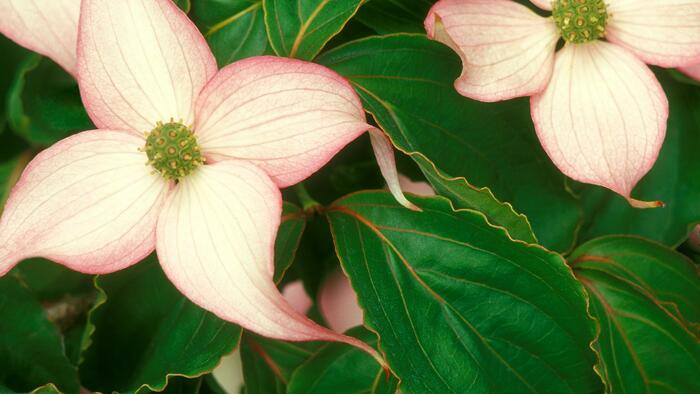 10 images de fleurs