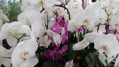 Le marché aux fleurs à Paris