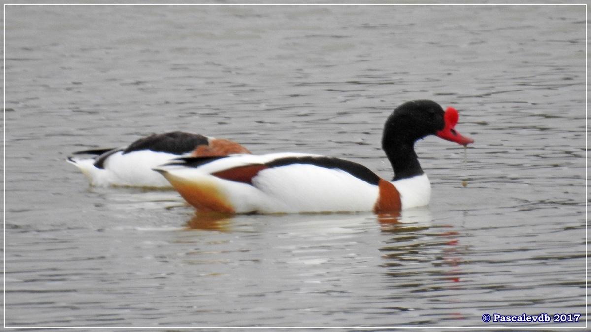 Réserve ornitho du Teich - Mars 2017 -3/15