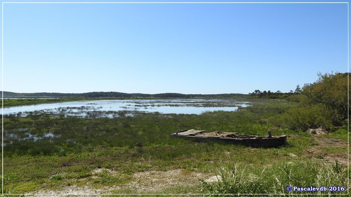 Pointe de Saint Brice et prés salés d'Arès - Mai 2016 - 3/9