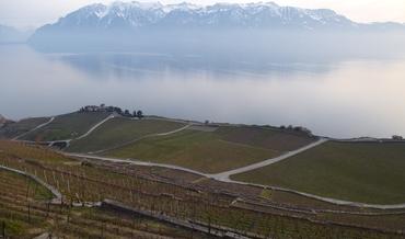 Vignoble des Lavaux - Massif du Chablais
