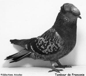 Tambour de Franconie
