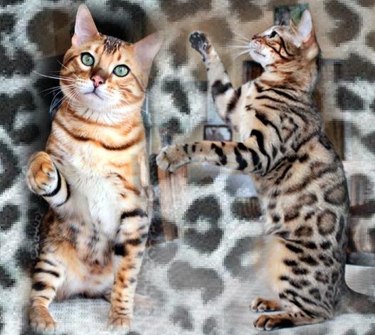 kotimaley8295753-bw-leopard-peau-arriere-plan-ou-la-texture-grande-resolution