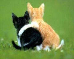 mage de chat