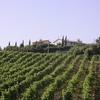 Les vignes de la Toscane