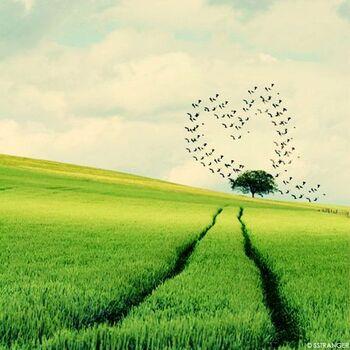 A coeur ouvert...