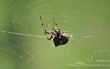 Araignée - p57