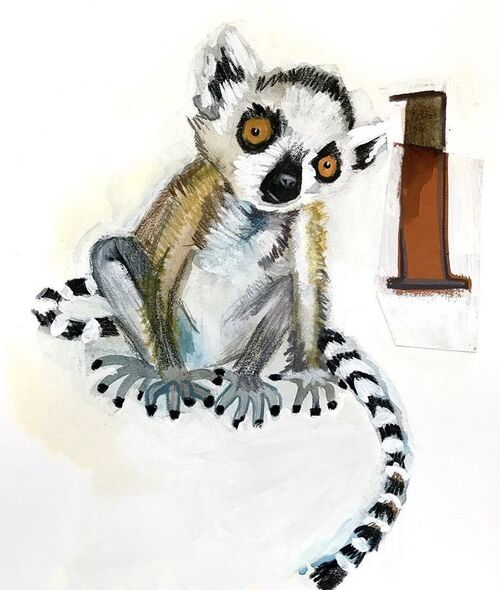 lémuirens illustrés