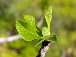 Le développement d'un être vivant végétal et sa reproduction