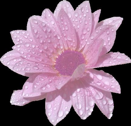 Une fleur / 1