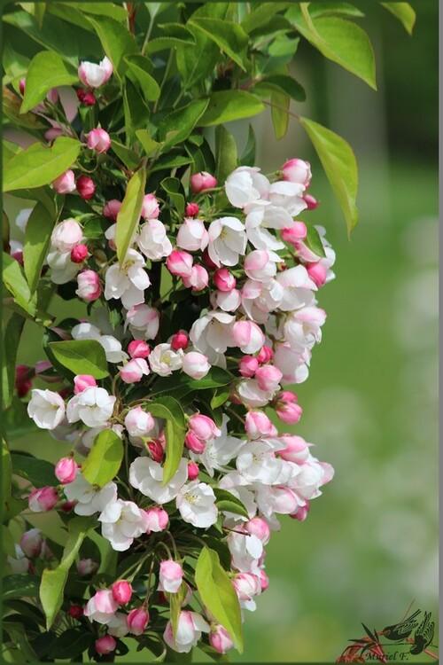 Foire aux plantes d'Aywiers 2015 (partie 2)