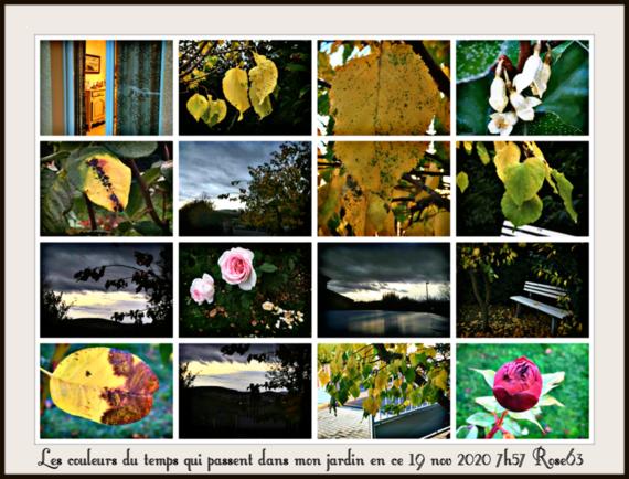 L'automnedansmonjardinRose63le19nov2020Rose63