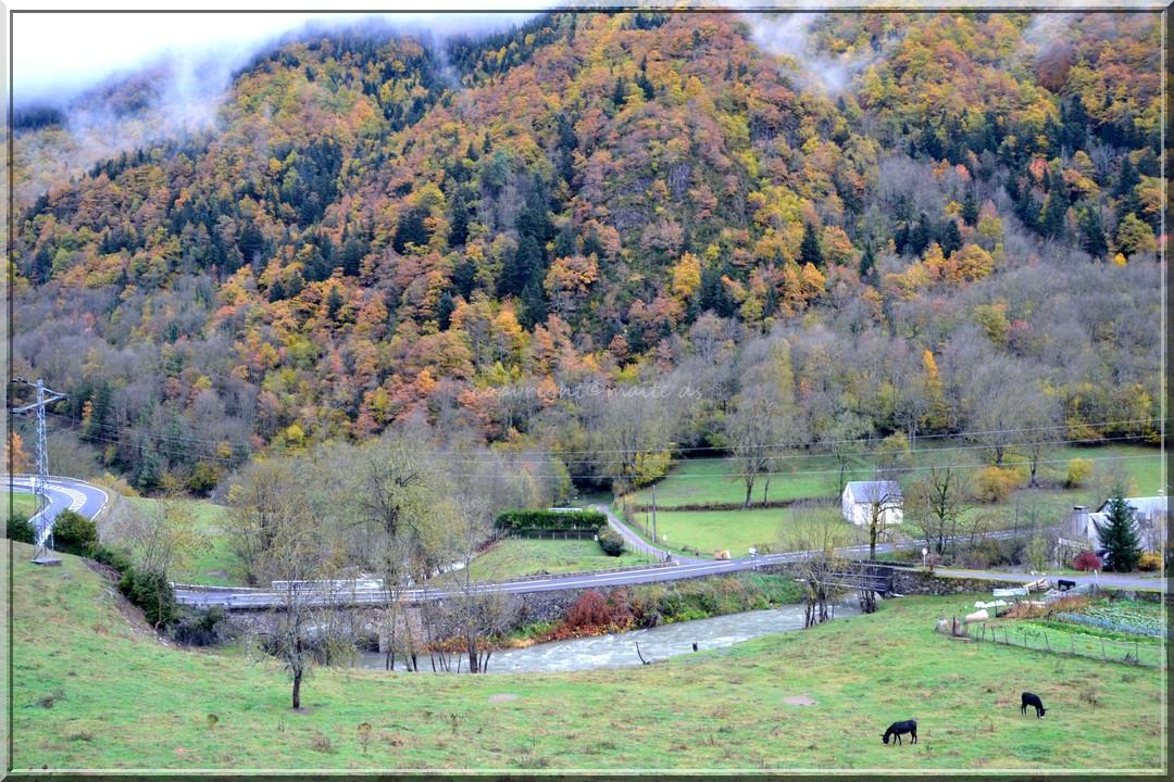 Ânes, mes amis ! Htes-Pyrénées 13-11-2013