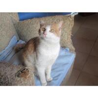 Chat trouvé au 11/01/14