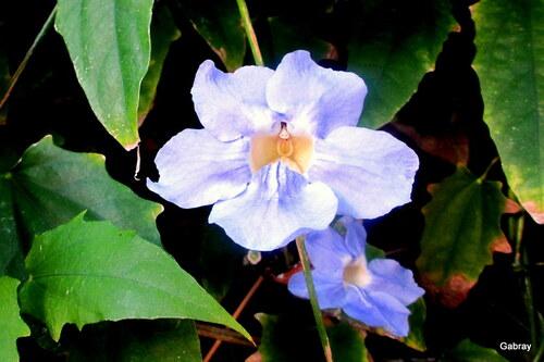 Madère : encore des fleurs ... n 37