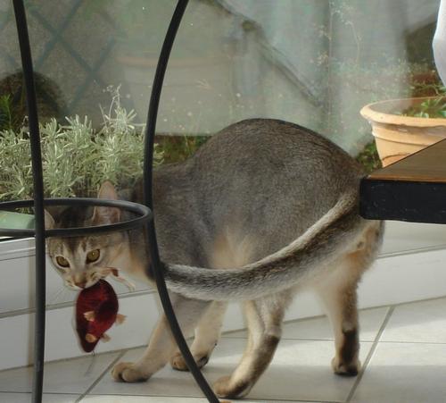 La chasse à la souris ......
