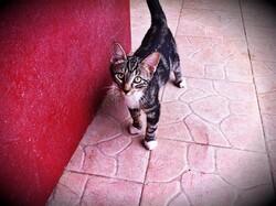 Gros plan sur nos chatons