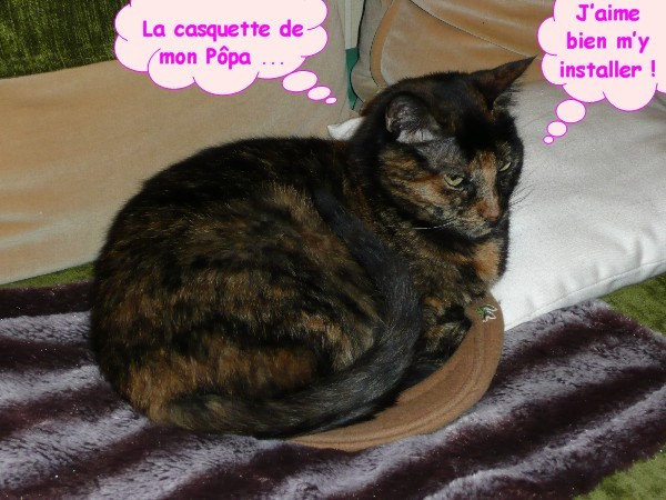 Casquette chat 1