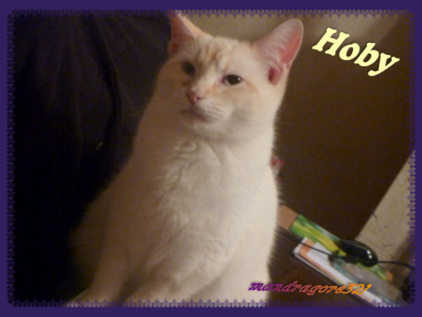 Hoby-2