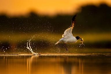 Photographier les oiseaux pêcheurs ...