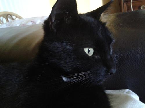 Mon autre chat . Jackie (oui c bizarre)