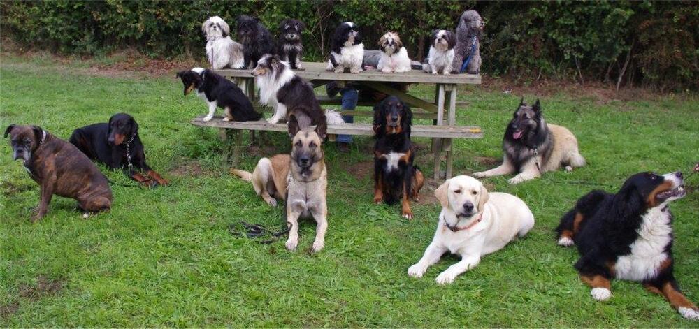 Une belle vie de chien.....