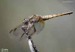Insectes variés 1 - 2013