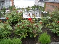 Molde-ville des roses