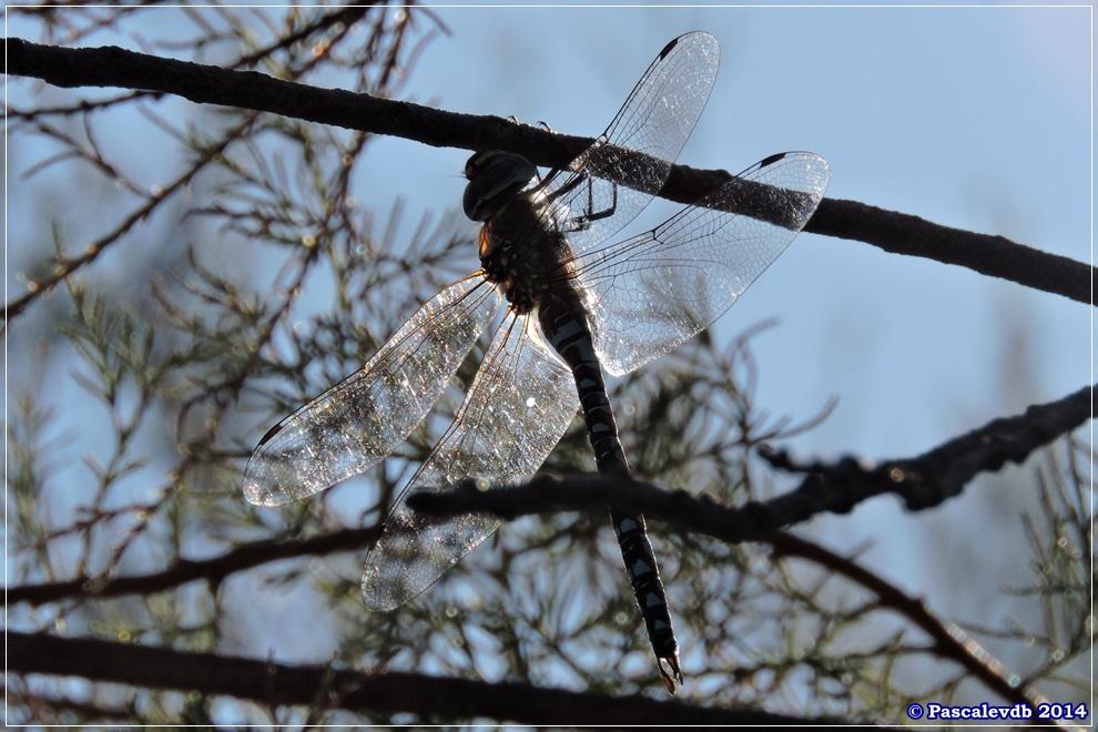 Réserve ornithologique du Teich - 2/10