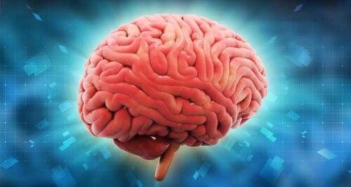 Des aliments qui abiment votre cerveau