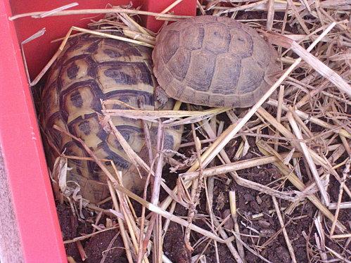 tortues---catrice-etc-002.JPG