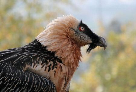 L'un des oiseaux les plus mystérieux de la planète