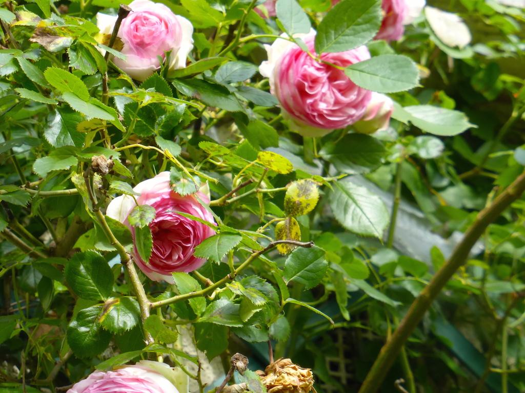 Le 27 avril il pleut... en plus photos du jardin chez nous.