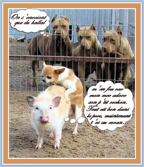 Une histoire de cochon ....