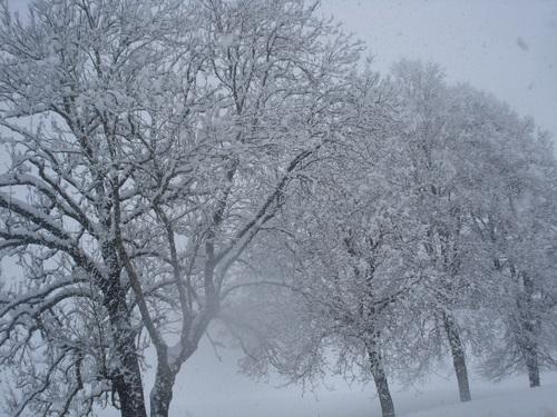 bonne journée, ici plus de 40centimétre  dans neige, j'ai fait mes 6kilométres dans la neige