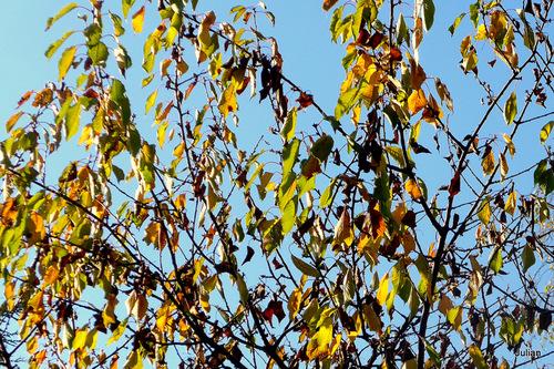 Automne : couleurs des feuilles (1)