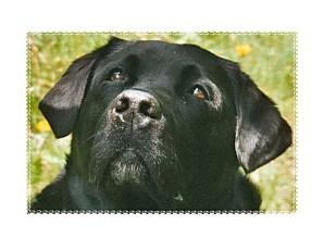 luby-portrait-2003.jpg