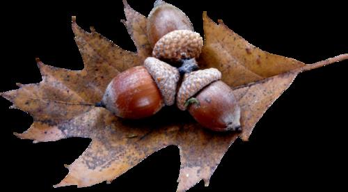 L'automne  Poème de l'automne